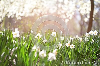 Summer Flowers Background