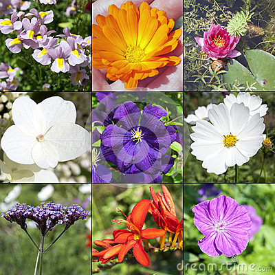 Summer flowers collection