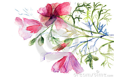 Summer flowers, watercolor illustration
