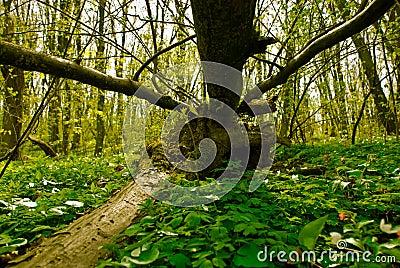 Summer forest landscape view