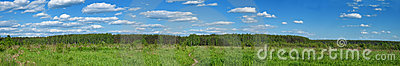 Summer forest panoramic