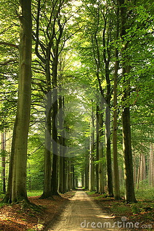 Free Summer Forest Road Royalty Free Stock Photography - 8016027