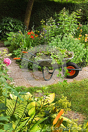Summer garden with flowers