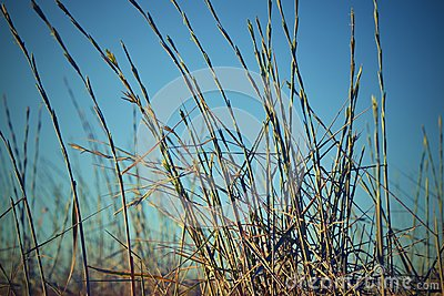 Summer grass on a background of the blue sky Stock Photo
