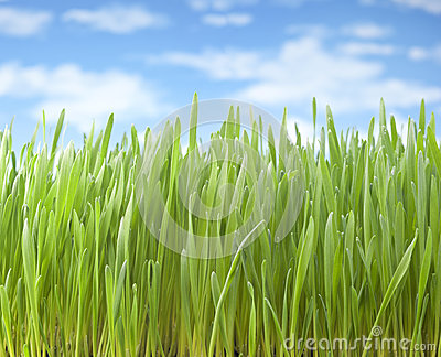 Summer Grass Sky Background