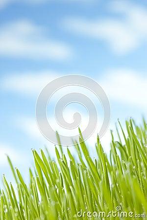 Summer Grass Sky Background