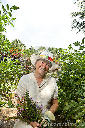 Summer Herb Garden