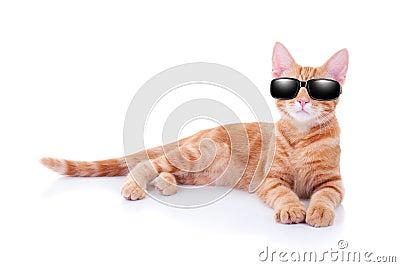 Summer Holiday Cat
