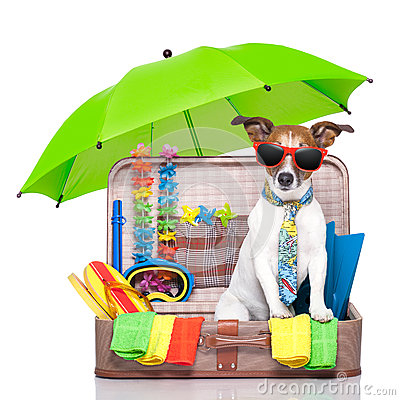 Free Summer Holiday Dog Stock Photography - 31584092