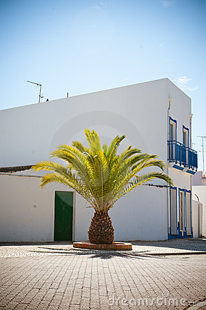 Summer house and palm tree in Portugal