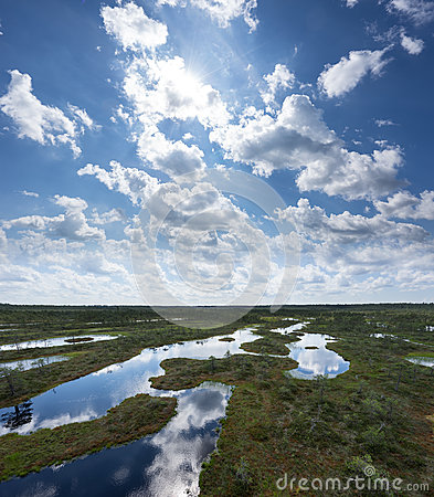 Free Summer In The Bog. Trees, Clouds And Sky Reflection In The Swamp Lake. Forest And Marsh. Eevening In Moor. Stock Image - 77701221