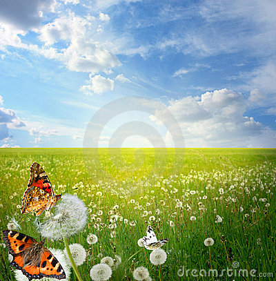 Free Summer Landscape Royalty Free Stock Photography - 19927717