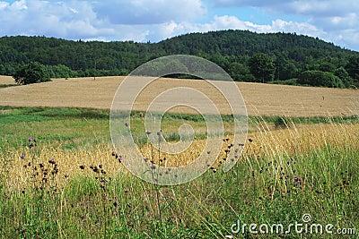 Summer landscape (2)