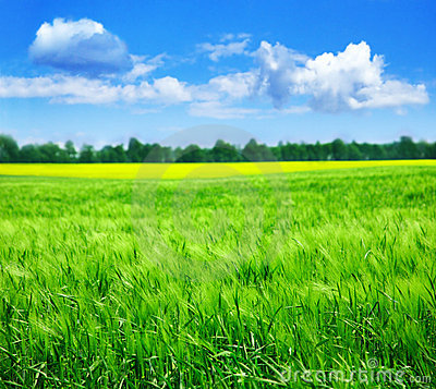 Free Summer Landscape Stock Photography - 5298672