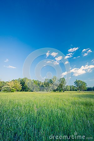Free Summer Landscape And Storm Clouds. Meadow Field And Green Trees Stock Photography - 108437872