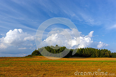 Summer landscape with a field and forest