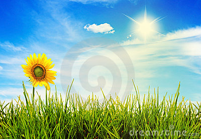 Summer landscape green fields and beautiful sky