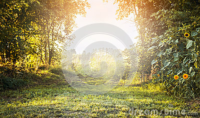 Summer landscape, with green grass and trees, yellow flowers with sunlight sky,natural background Stock Photo