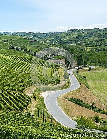Summer landscape in Langhe, Piedmont