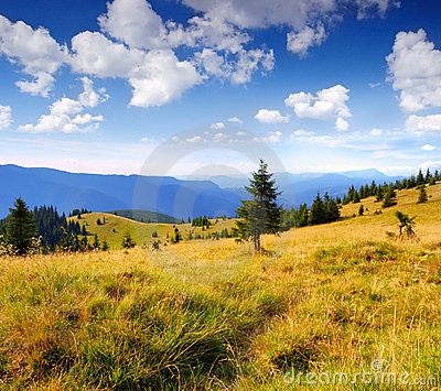 Summer landscape in mountains a sunny day