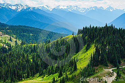 Summer Landscape, Olympic National Park