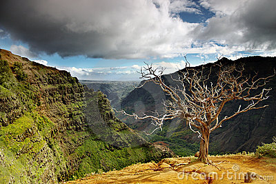 Summer landscape at waimea canyon