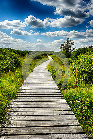 Free Summer Landscape With Wooden Walkway Royalty Free Stock Images - 41438809
