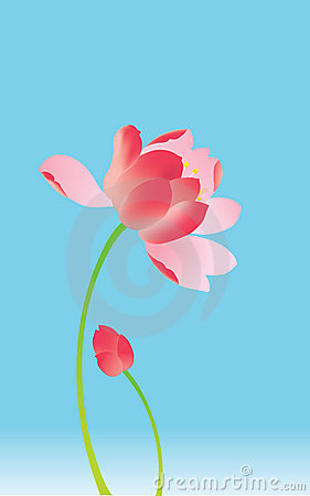 Summer lotus