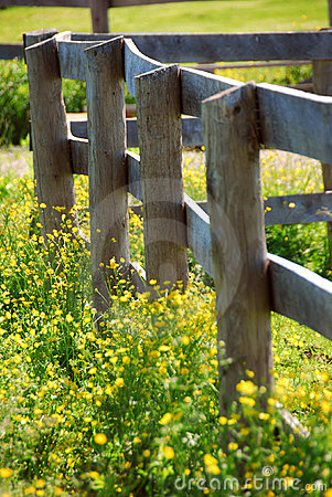 Free Summer Meadow Stock Photography - 2223722
