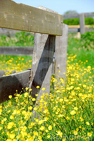 Free Summer Meadow Royalty Free Stock Photography - 2241947