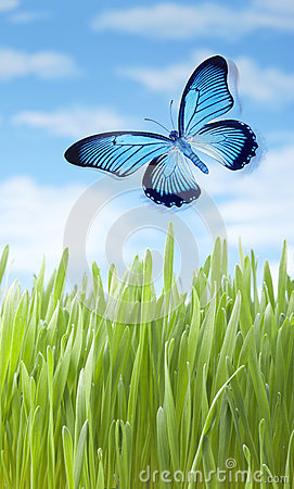 Free Summer Meadow Grass Butterfly Royalty Free Stock Image - 32762326