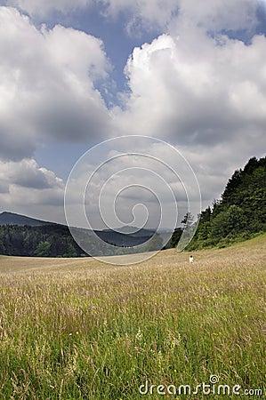 Summer meadow, Slovakia