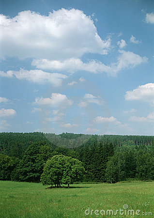 Summer meadow with trees