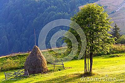 Summer mountain grassland landscape