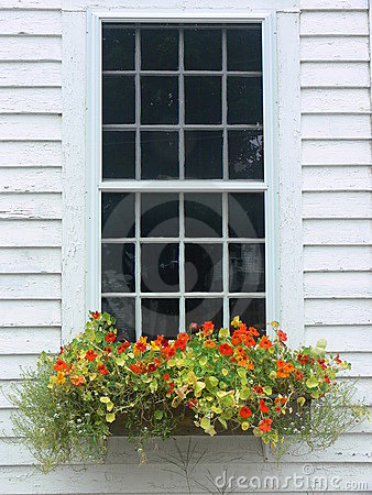 Summer: orange flower window box