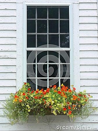 Free Summer: Orange Flower Window Box Royalty Free Stock Images - 15642259