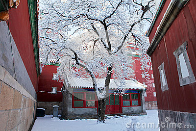 Snow-covered landscape