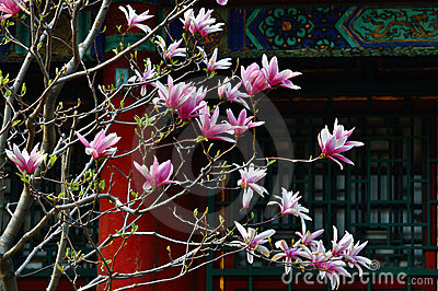 Summer Palace Magnolia Flower
