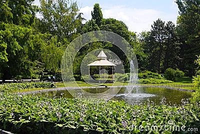 Summer park scene