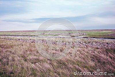 Summer pasture landscape