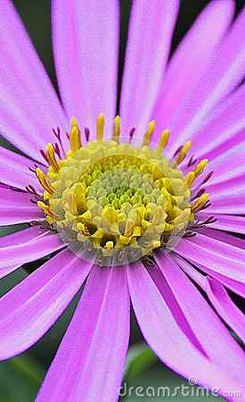 Free Summer Petals Stock Image - 103128351