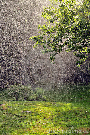 Free Summer Rain Royalty Free Stock Image - 20659406
