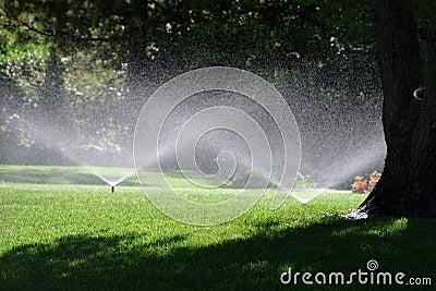 Summer Shower