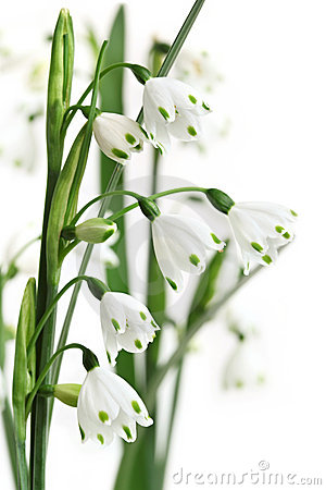 Free Summer Snowflake Stock Photography - 10300542