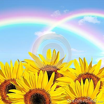 Free Summer Sunflower Beauty Stock Photo - 8052330