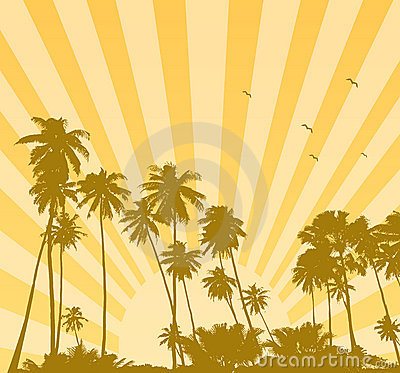 Free Summer Sunrise With Palms Royalty Free Stock Photo - 6997325