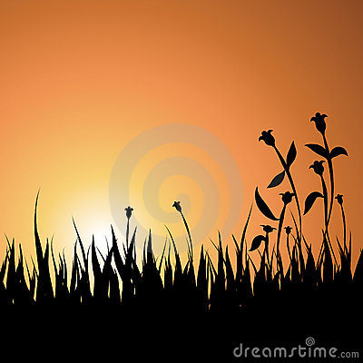 Summer Sunset Background with Grass and Flowers