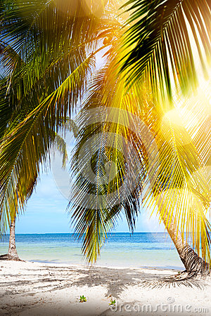 Free Summer Tropical Beach; Peaceful Vacation Background Stock Images - 82652504