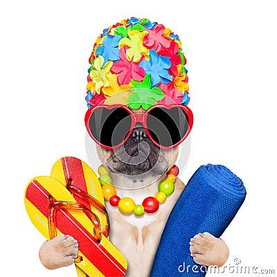 Free Summer Vacation Dog Stock Photo - 48516300