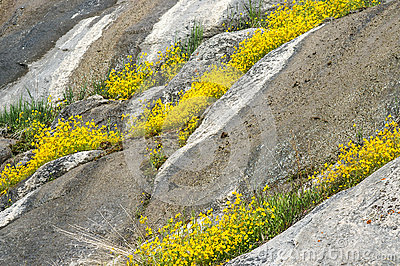 Summer wildflowers on rock